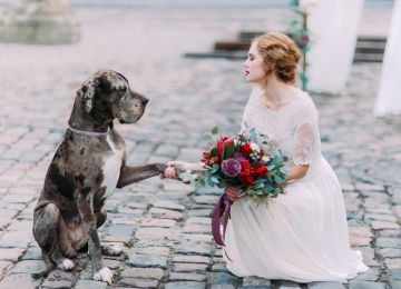 Here Comes the...Pupper? Including Pets in Your Wedding