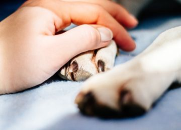 Grief Is Universal: Helping Your Pets Cope With Loss