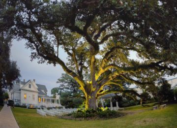 History's Scars: Understanding the Plantation Wedding Controversy