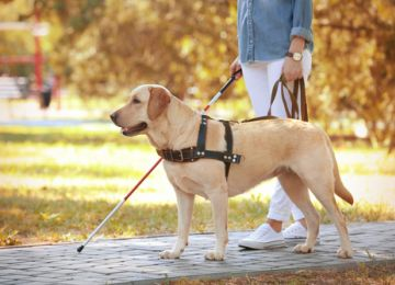 Service Animals and Your Wedding: What You Need To Know